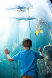 Young man touching a illuminate fish-tank Royalty Free Stock Images