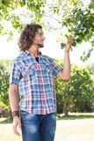 Young man touching leaf on tree Stock Photos