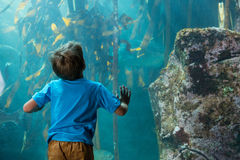 Young man touching a tank with algae Royalty Free Stock Image