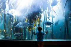 Young man touching a tank with big fish Royalty Free Stock Photos