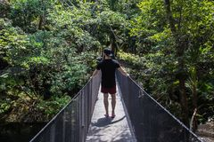 Young men traveling in a tropical jungle on a summer day on a wooden bridge. Young man traveling in a tropical jungle on a hot summer day on a wooden bridge royalty free stock images