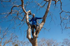 Young man on Tree-India Royalty Free Stock Image
