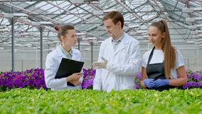 A young man and two women in white coats and black aprons. Three scientists, biologists or agronomists examine and stock video