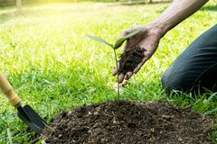 The young man used Siem to dig the soil to plant trees in his backyard during the day royalty free stock images
