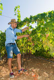Young man, vine grower, in the vineyard. Stock Photography
