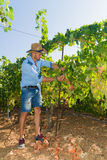 Young man, vine grower, in the vineyard. Stock Photos