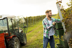 Young man in the vineyard Royalty Free Stock Photo