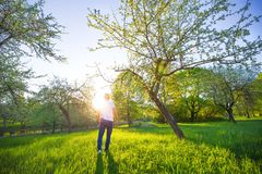 Young man walking in beautiful green park in the morning royalty free stock photo