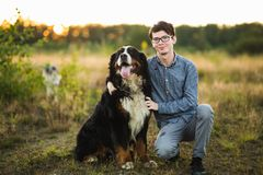Young man walking with Bernese Mountain Dog on the summer field. Front view at a young caucasian man in glasses sitting with Bernese Mountain Dog on the summer stock photo