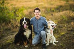 Young man walking with Bernese Mountain Dog on the summer field. Front view at a young caucasian man sitting with two dogs Bernese Mountain Dog and shepherd on royalty free stock photography