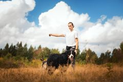 Young man walking with Bernese Mountain Dog on the summer field. Side view at a young stylish caucasian man training Bernese Mountain Dog on the summer field royalty free stock images