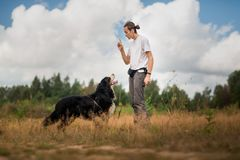 Young man walking with Bernese Mountain Dog on the summer field. Side view at a young stylish caucasian man training Bernese Mountain Dog on the summer field royalty free stock photography