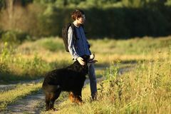 Young man walking with Bernese Mountain Dog on the summer field. Side view at a young caucasian man training Bernese Mountain Dog on the summer field royalty free stock photography