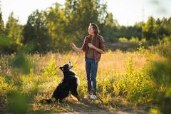 Young man walking with Bernese Mountain Dog on the summer field. Side view at a young stylish caucasian man training Bernese Mountain Dog on the summer field stock photo