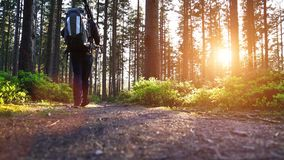 Young man in silent forrest with sunlight stock video footage