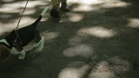 Young man walking with his dog in the park stock video footage