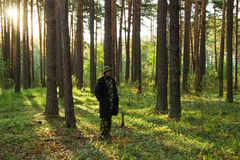 Young man is walking in a pine forest on sunrise. Stock Image