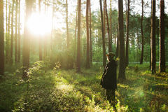 Young man is walking in a pine forest on sunrise. Royalty Free Stock Photo