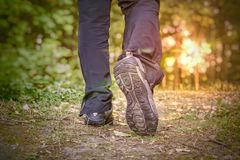 Young man is walking at sunset in forest.  Royalty Free Stock Image