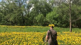 A young man walks in a spring meadow, overgrown with flowering dandelions. On the head is a wreath of dandelions. Sunny spring in. The park stock video footage