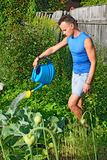 Young man watering of blue watering the cabbage in the garden on Stock Photos