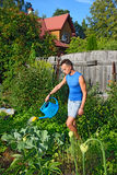 Young man watering of blue watering the cabbage in the garden on Royalty Free Stock Images
