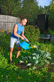 Young man watering the cabbage in the garden on the plot in the Stock Photo