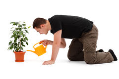 Young man watering flower Royalty Free Stock Photos
