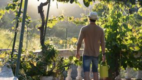 Young man watering plants in garden stock video footage