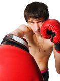 Young man wearing boxing gloves Royalty Free Stock Images