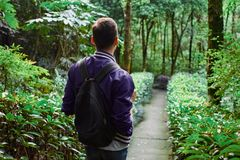 Man traveling in the forest with backpack. Young man wearing the purple blazer is walking in the forest with gray backpack stock photos