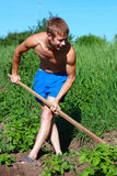 A young man weeding the beds with potatoes Royalty Free Stock Photography