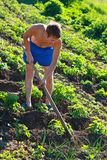A young man weeding the beds with potatoes Royalty Free Stock Image