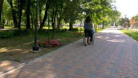 Young man on wheelchair walking with his wife outdoors stock video