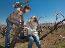 Young man and woman on a tree. Attractive couple playing in garden among the blossoming peach trees Stock Images