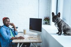 Young man working by computer while Frenchie dog sitting. On windowsill royalty free stock images