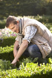 Young man working in garden Royalty Free Stock Photos