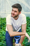 Young man working in a greenhouse. Young handsome photogenic guy is sitting between rows of plants while working in a greenhouse Royalty Free Stock Photography