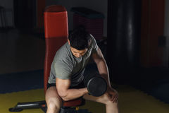 Young Man Working Out Biceps - Dumbbell Concentration Curls. Stock Photos