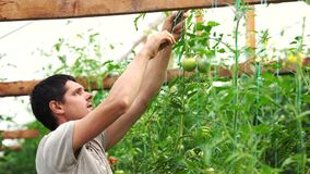 Young man working in the vegetable garden. stock video footage