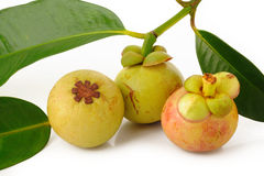 Young mangosteen on white Royalty Free Stock Photo