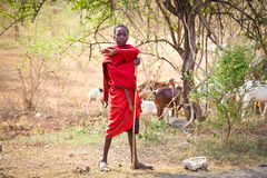 Young Masai herders herd in savannah. Tanzania. Royalty Free Stock Image