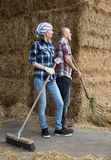 Young and mature fermers with pitchforks working in cows barn Royalty Free Stock Image
