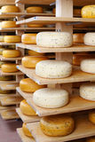 Young and matured cheese-wheels on shelves Royalty Free Stock Photography