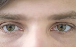 Young men`s green eyes royalty free stock images
