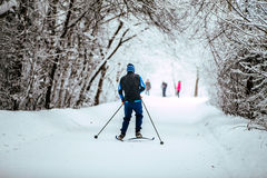 Young men on skis in winter forest. Young men on skis in winter woods rides snow-covered alley in cold weather Royalty Free Stock Photos