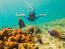 Young men snorkeling exploring underwater coral reef landscape background in the deep blue ocean with colorful fish and stock photos