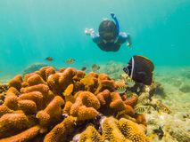 Young men snorkeling exploring underwater coral reef landscape background in the deep blue ocean with colorful fish and. Marine life royalty free stock photos