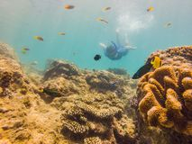 Young men snorkeling exploring underwater coral reef landscape background in the deep blue ocean with colorful fish and. Marine life stock images