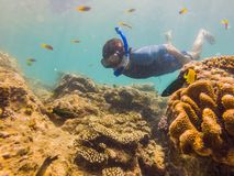 Young men snorkeling exploring underwater coral reef landscape background in the deep blue ocean with colorful fish and stock photo